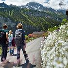 swiss-alp-hiking